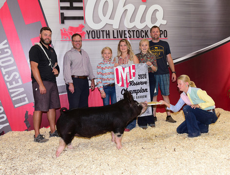 OYLE Res. Champion Berk Barrow Oksana Gossard  Sired by Gorilla Monsoon  Bred by Mauck