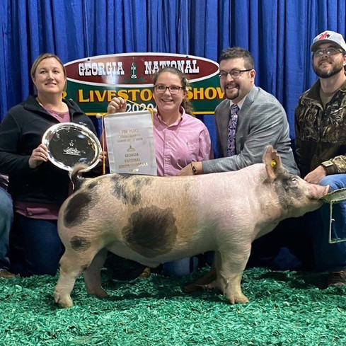 5th Overall Barrow  Georgia National  Shown by: Emily Beasley  Sired by: No Mas