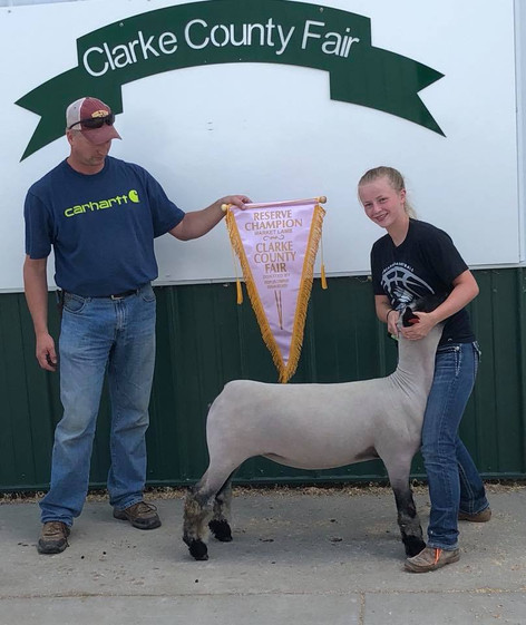 Reserve Grand Champion Market Lamb 2018 Clarke County Fair – IA Shown by Kellie McAfee Raised by Rookstool Sired by Game Ball