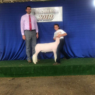 Reserve Champion Whiteface