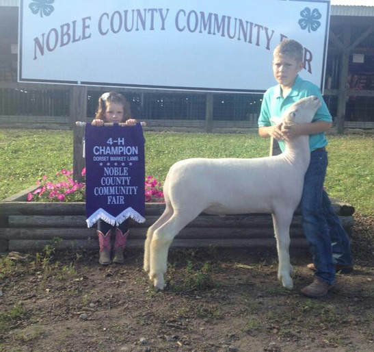Champion Whiteface Market Lamb 2014 Noble County Fair, IN Congratulations Dailon Dice! Sired by Witness
