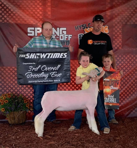 Champion White Face Ewe & 3rd Overall Commercial Ewe 2020 Spring Kickoff  Shown By: Alex Resch  Sire: Colorblind