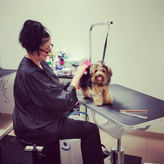 Instagram - #doggievip #bayfrontparkmiami #doggrooming #dogdaycare #dogwalkers #