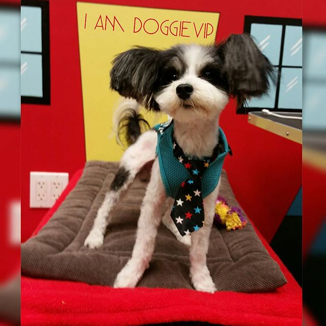 Instagram - @doggievip where your pooch is pampered #happydog #rescuedog #dogday