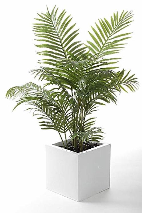Palm - 10 inch