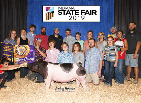 3rd Overall Cross Gilt 2019 Indiana State Fair