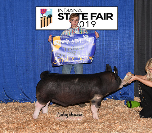 3rd Overall Berk Barrow & Champion Berk Barrow IJSC Points  Indiana State Fair  Ethan Beaman  Bred By : Beaman Show Stock  Sired by Non-Stop