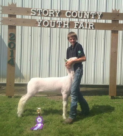 Champion Whiteface Market Lamb 2014 Story County Fair Congratulations Faga Family! Sired by Witness