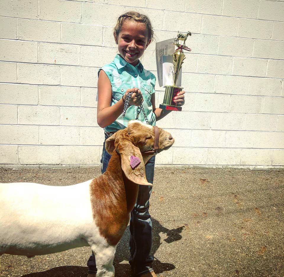 5th Overall Market Goat Knox County Fair  Bred By: Carr Show Goats Shown By: Julian Ball