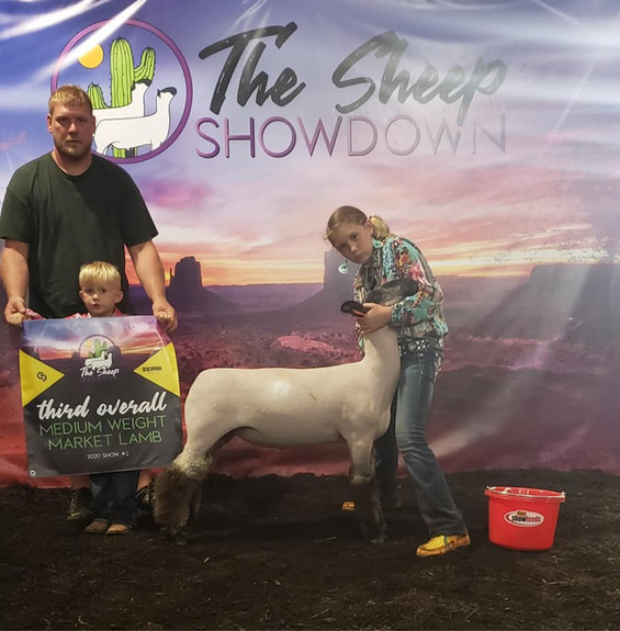 Third Overall Medium Weight Market Lamb The Sheep Showdown   Sired By: Strictly Business Shown By: Trinity Daley