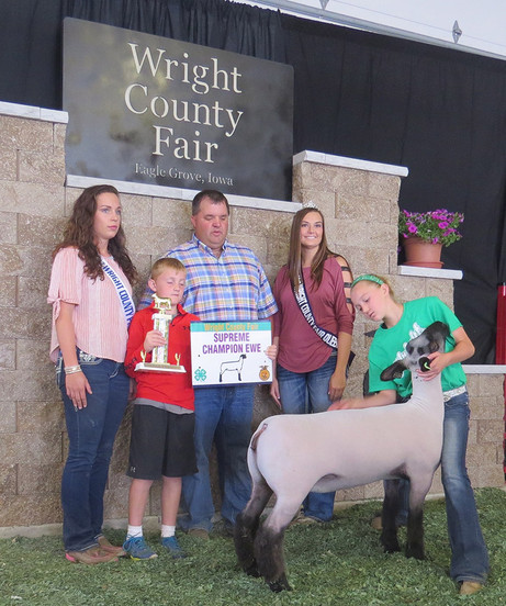 Supreme Champion Breeding Ewe 2017 Wright County Fair  Shown by Sawyer Morrical Sired by Bushwacker
