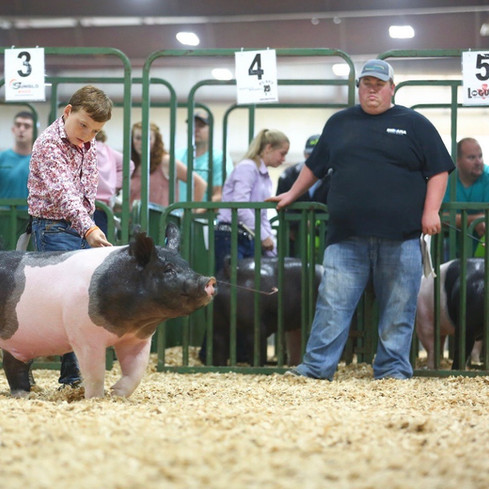 3rd Overall Market Hog Indiana Stock Show  Shown by: Rhyker Mauck  Sired by : Dirty Love'n