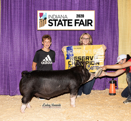Indiana State Fair  Res. Champion Berk Barrow  Kelsey Clamme