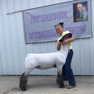 Grand Commercial Ewe