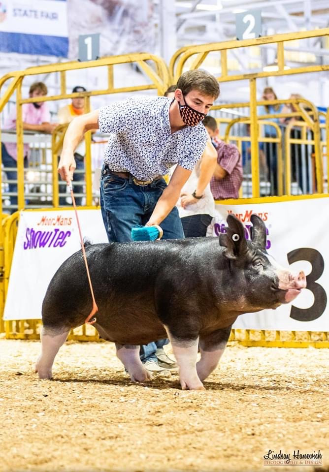 3rd Overall Berk Gilt 2020 Indiana State Fair  Vade Dishman Sired By : Glass House