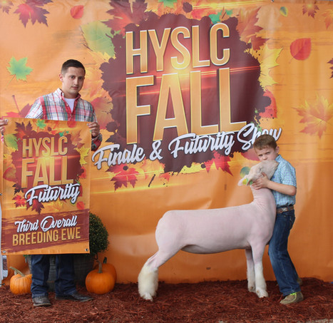 Champion White Face Commercial Ewe, 3rd Overall Commercial Ewe 2020 HYSLC Fall Futurity  Shown By: Tucker Morrical Sire: Colorblind