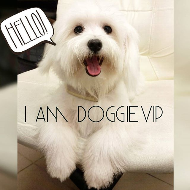 Instagram - Fluffy @doggievip where your pooch is pampered #happydog #rescue #re