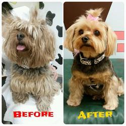 Instagram - Cali @doggievip a real #makeover #dogmakeover #transformation #happy