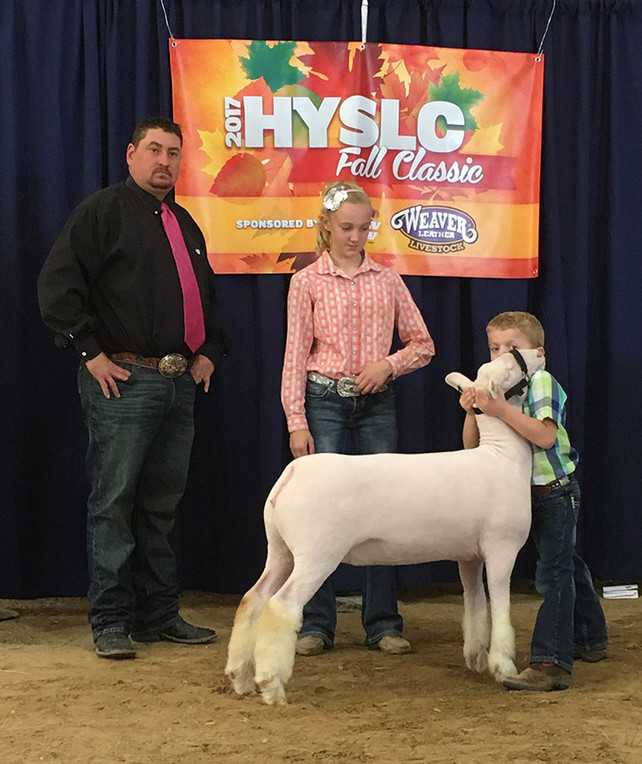 Reserve Champion White Face  2017 HYSLC Fall Futurity & Fall Classic Shown by Tucker Morrical Off Label x Witness' Twin Sister