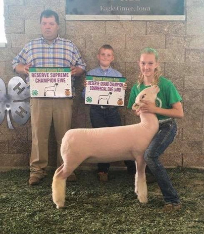 Reserve Supreme Breeding Ewe 2018 Wright Count Fair – IA Shown by Sawyer Morrical Shoot Yeah x Witness