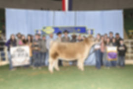 Grand Steer - NWSS - Lillie Skiles - Rai