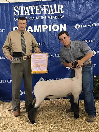 Reserve Champion Commercial Ewe  Virgini