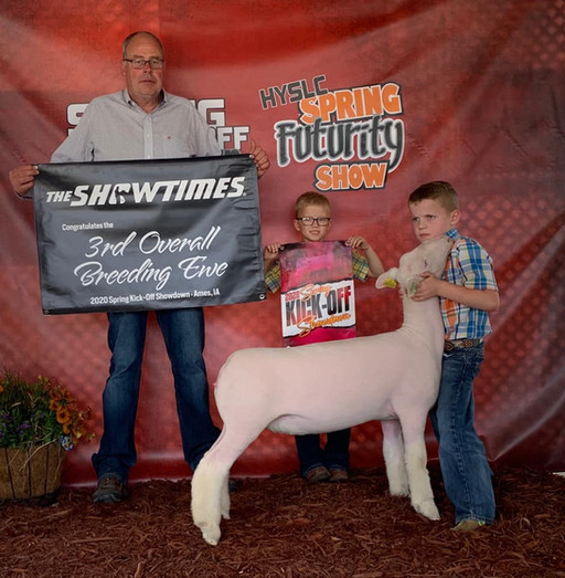Champion White Face Ewe & 3rd Overall Commercial Ewe 2020 HYSLC Spring Futurity Shown By: Tucker Morrical Sire: Colorblind