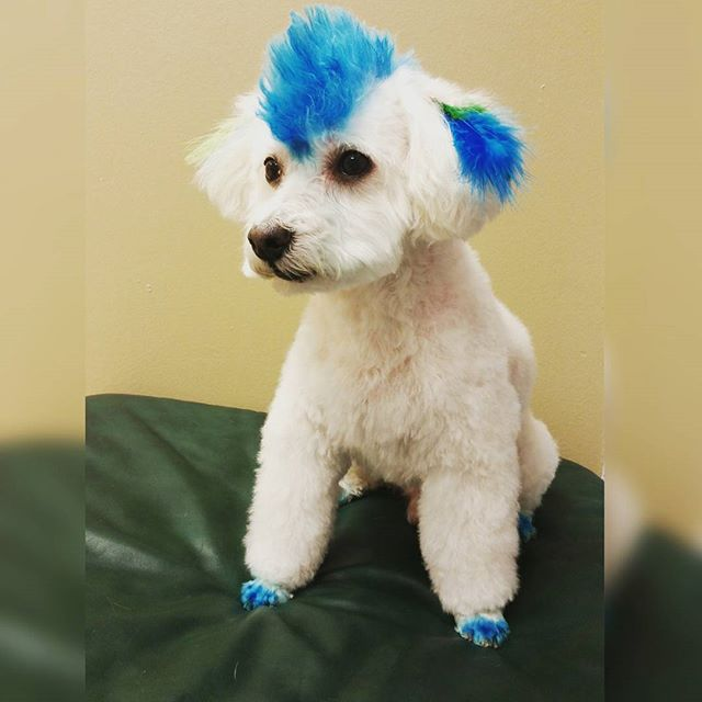 Instagram - @doggievip #happydog  #smilingdog #dogdaycare #dogwalkers #doglover