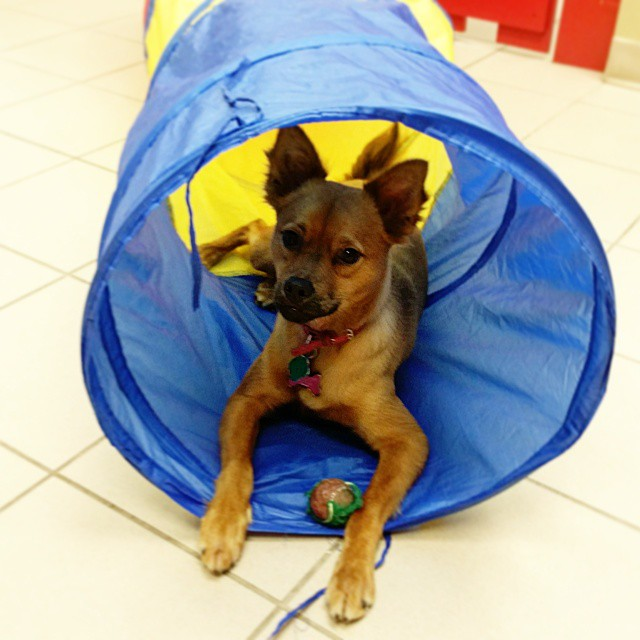 Instagram - @doggievip #happydog #smilingdog #dogdaycare #dogwalkers #doglover #