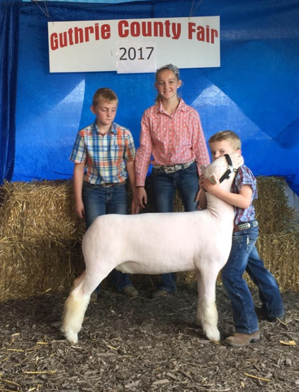 Champion White Face 2017 Iowa State Block & Bridle Champion White Face 2017 Univ. of Minnesota B&B  Reserve White Face  2017 Guthrie County Jackpot Shown by Tucker Morrical Off Label x Witness' Twin Sister