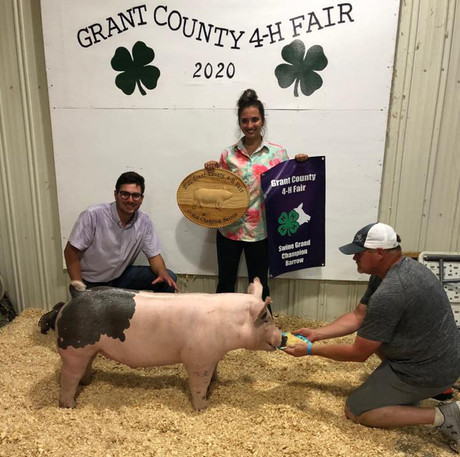 Grand Champion Barrow Grant County Fair, IN Kristen Golf