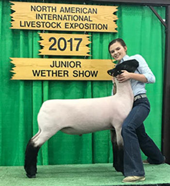 Reserve Champion Suffolk NAILE.jpg