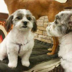 Instagram - Lola @doggievip #happydog #smilingdog #newclient #dogdaycare #dogwal