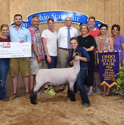 Grand Champion Commercial Ewe  Ohio Stat