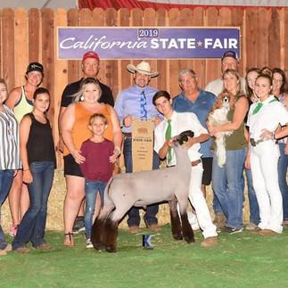 Grand Champion California State Fair 4-H