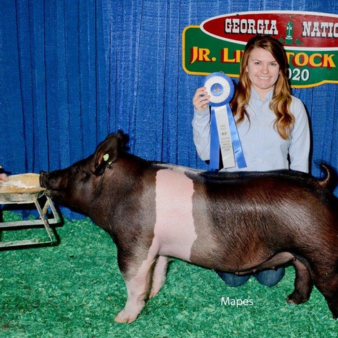 Class winner  Georgia National  Sired by: Dirty Love'n  Shown by: Paige Pascal