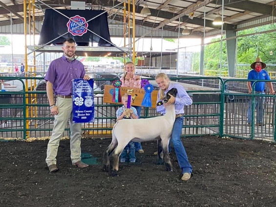 Grand Champion Market Lamb  Athens County Fair   Sired By: Top Tier  Shown By: Kyndal Snedden