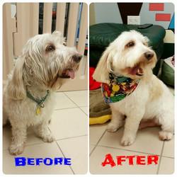 Instagram - DOGGIE VIP MAKES ME HAPPY @doggievip #happydog #smilingdog #dogdayca