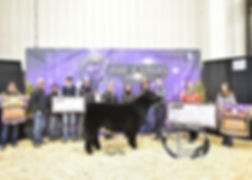 Grand Steer Ring A - 3rd Overall Ring B
