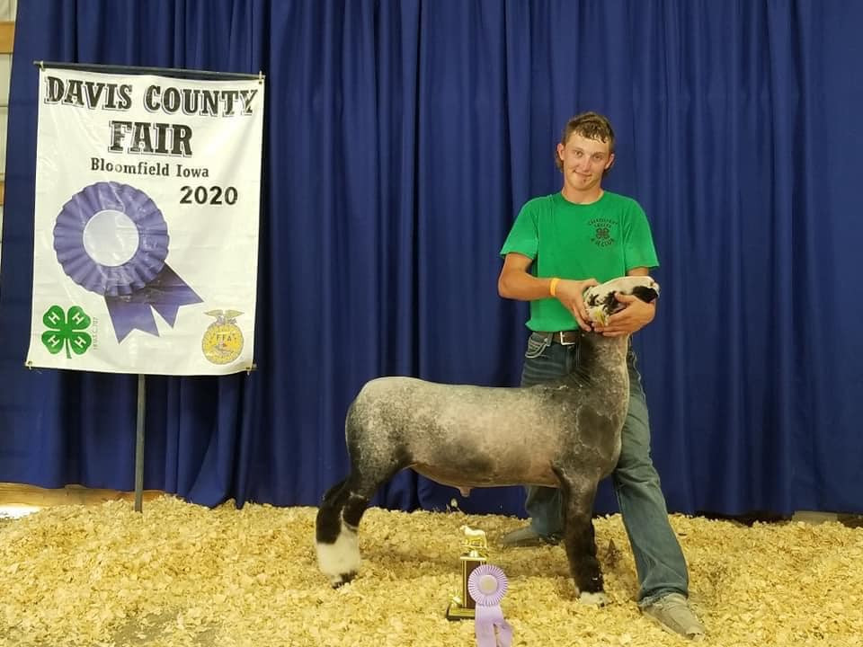 Reserve Champion Market Lamb 2020 Davis County Fair  Shown By: Bish Family  Sire: Colorblind