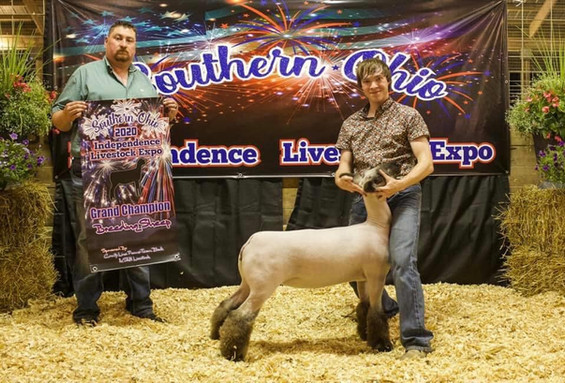 Grand Champion Breeding Sheep  Southern Ohio Independence Livestock Expo  Sired By: Strictly Business Shown By: Weston S
