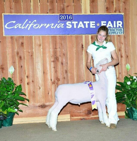 Champion AOB  2016 California State Fair 4-H Shown by Catherine Bayne Sired by Off Label