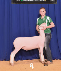 Champion Dorset 2016 Enid Northwest District Show Shown by Lexi Anderson Sired by Witness