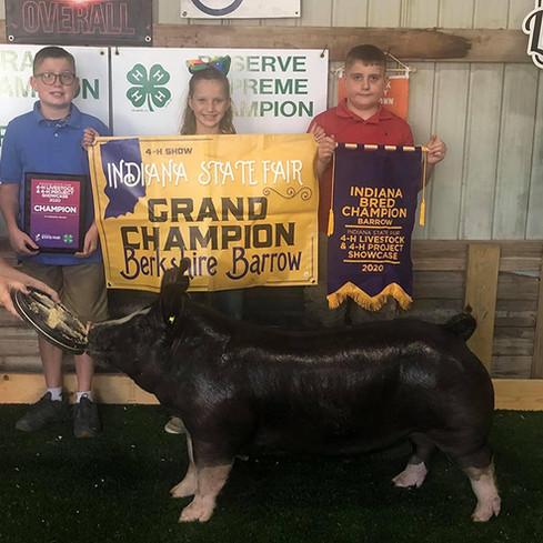Indiana State Fair Champion Berk Barrow Alice Hawk Sired By Gorilla Monsoon Bred by Mauck Show Hogs