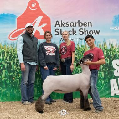 Class Winning Commercial Ewe