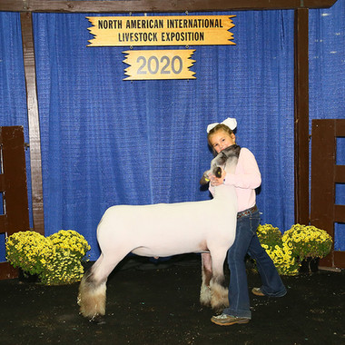 Reserve Champion Middle Weight Crossbred