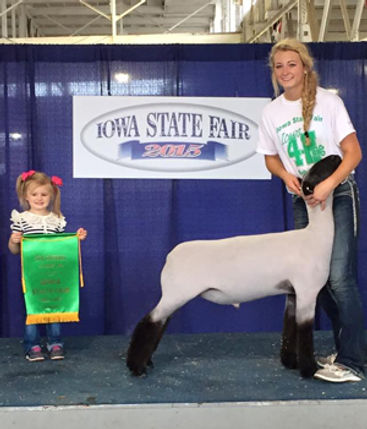 5th Overall Market Lamb  Iowa State Fair