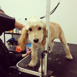 Instagram - @doggievip #doggievip #bayfrontparkmiami #dogdaycare #dogwalkers #do