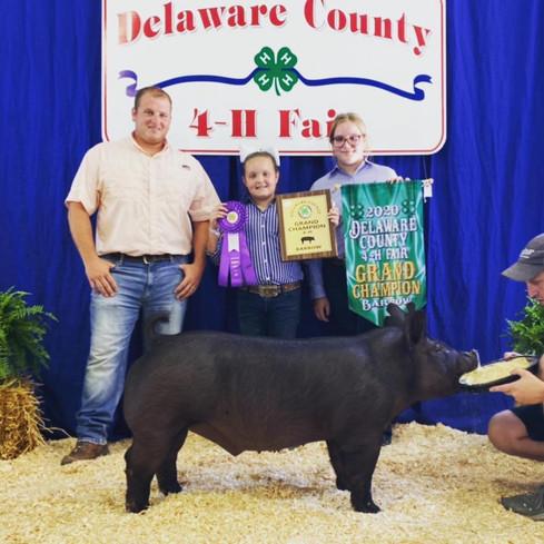Grand Champion Barrow Delaware County Fair, In. Laykn Mauck