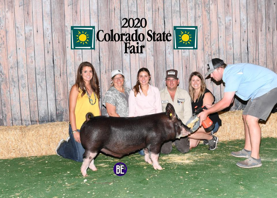 Colorado State Fair Res. Champion Berk Barrow Sydney Vaughn Bred by Mauck Sired by Gorilla Monsoon